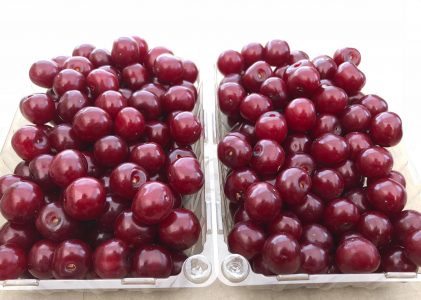 Sour Cherry Sign-up