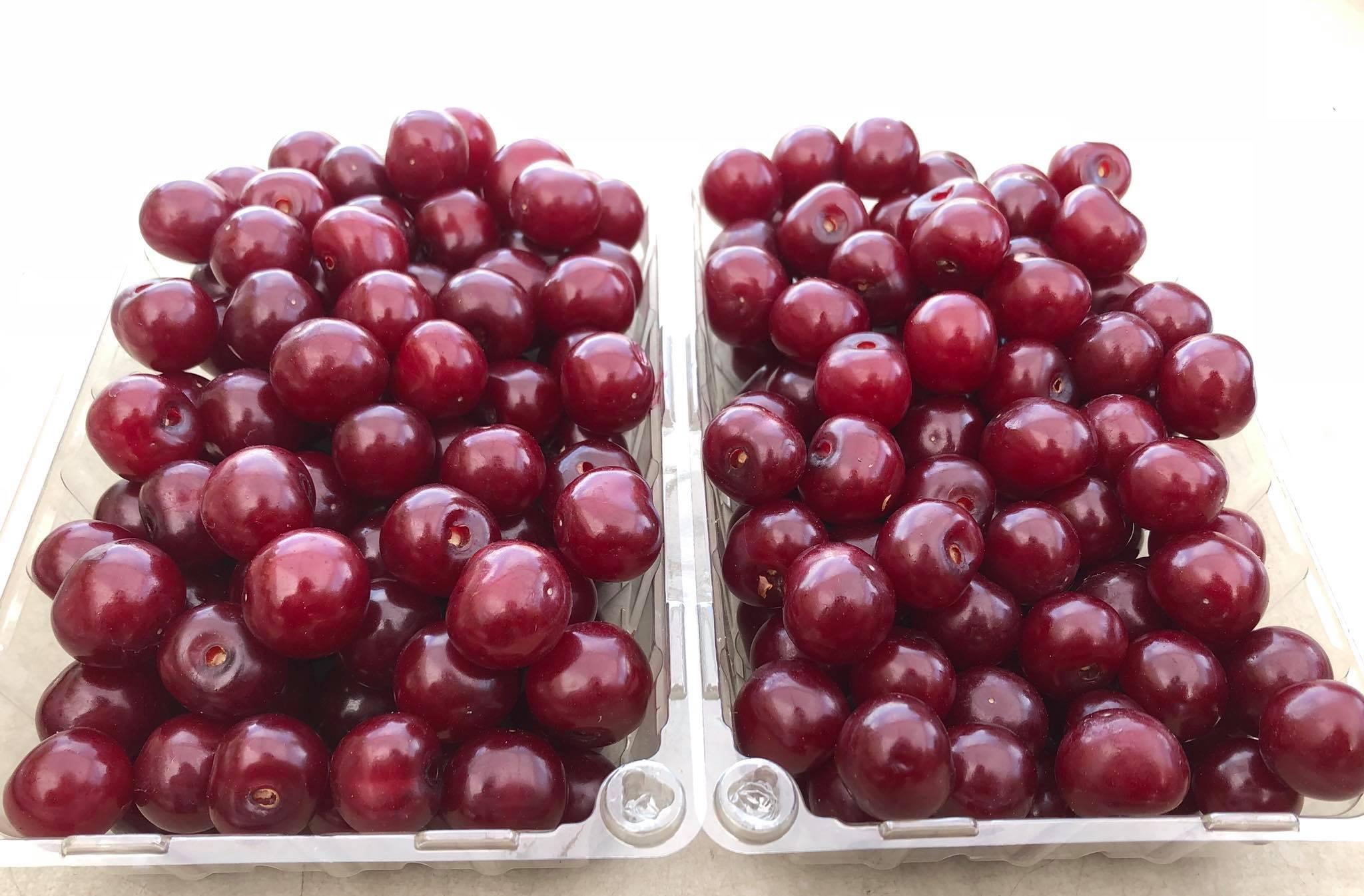 Fortunato Fruits