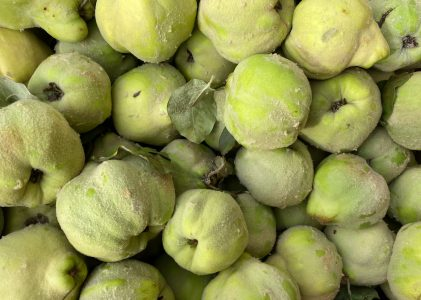 All about Quince